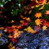 水辺の紅葉2