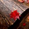 ベンチの上にも秋の色