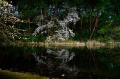じゅんさい池2