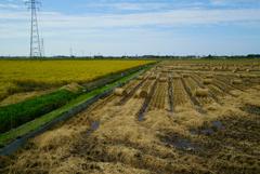 稲藁ロールの風景