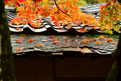 こけら葺き屋根にべに葉の彩り