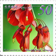 アメリカデイゴの花