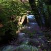 日に当たるつつじと竜頭の滝