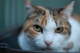 猫、眼光鋭く…