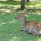 昼下がりの奈良公園にて