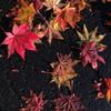 秋の足あと