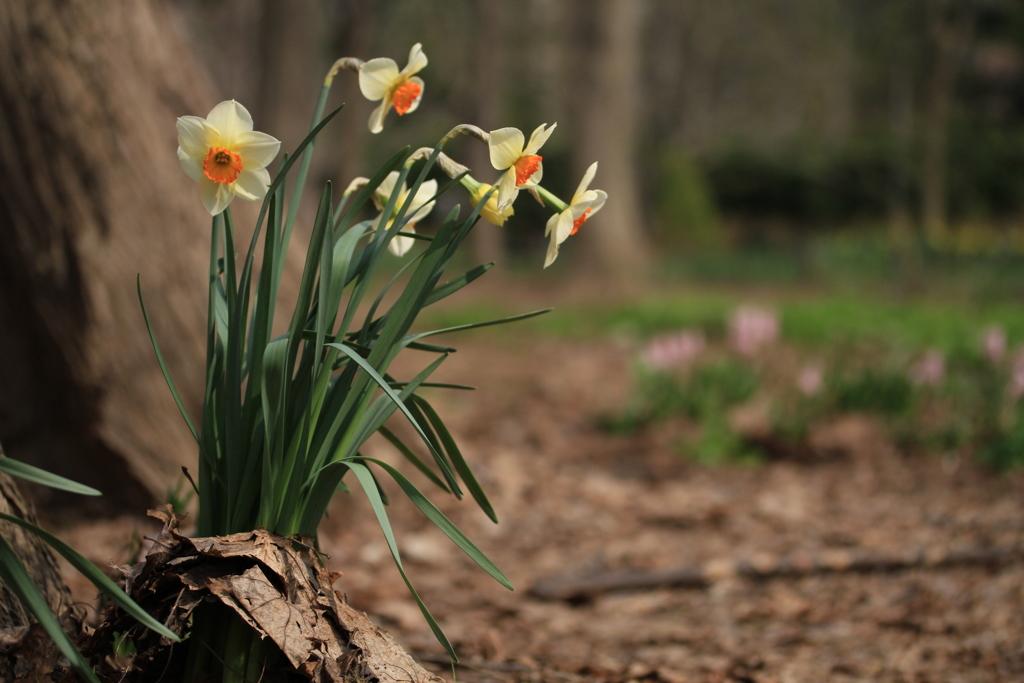 公園の片隅で、春を演出-2