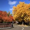 中島の秋-7