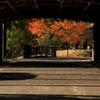 中島 その先の秋 -1