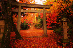 Autumn Carpet -紅の世界-