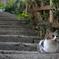 階段の街に暮らす