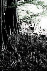 九大の森 2