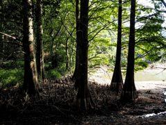 九大の森 3