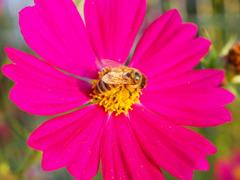花粉集め今日は終了