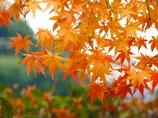 名残惜しい秋景色