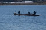 手賀沼の船曳網漁