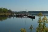 湖上バードウオッチング