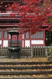 本土寺の紅葉 (ニ)