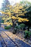 線路と黄葉