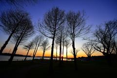 夕刻の手賀沼公園(2)