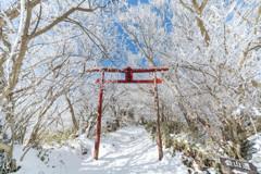 妙見神社 冬の鳥居