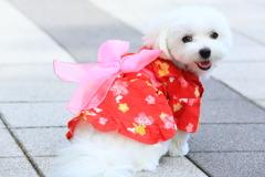 見返り美犬