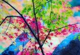 青葉と黄葉と紅葉
