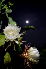 月の下で。。。