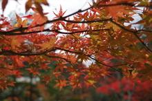 秋色 #2
