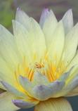 花の中心は・・・。