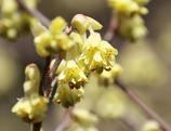 黄色い春もあったりする。