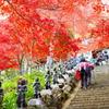 Autumn walk.(It was very hard!)