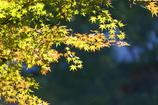 火の国の秋