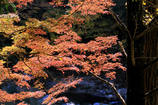 川辺の紅葉