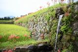 昭和の石垣
