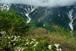 虹とシャクナゲ