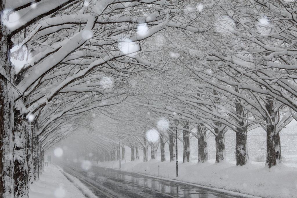 雪が降る道 by kei_shk (ID:16...