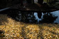 落ち葉のある池