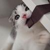 猫カフェ①子猫