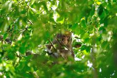 野生の猿を狙ってみました