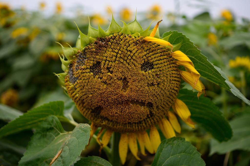 「夏の終わり」の画像検索結果