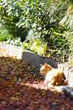 秋色ベッドで・・・