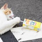 SONY SLT-A33で撮影した(ジュースを飲むネコ )の写真(画像)