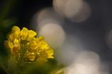 春の夢 vol,2