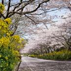 SONY SLT-A33で撮影した(春満開)の写真(画像)