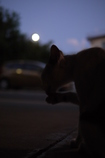 満月に遊ぶ