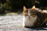 Cat in the Sunny Place.