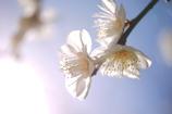 春のグラデーション