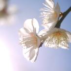 PANASONIC DMC-G1で撮影した(春のグラデーション)の写真(画像)