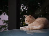 ネコのいる風景